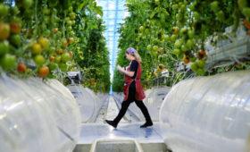 Российский агрохолдинг представил проект теплиц в Казахстане на $1 млрд
