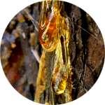 Кедровая живица содержится в составе крема Венорем