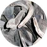 Панты алтайских маралов содержатся в препарате Нормолайф