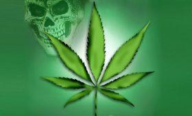 Частое курение марихуаны увеличивает риск болезней сердца и сосудов у молодых людей