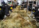 Производители молока попросили правительство «решить проблемы» с навозом