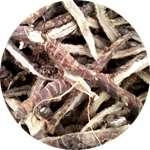 Корни Аира - компонент в составе Мицерила от грибка