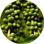 Зеленый кофе содержится в спрее ФитоСпрей