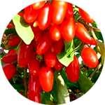 Семена и плоды годжи входят в состав Оксислим