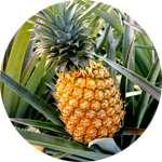 В составе саше Детокс Бокс содержится ананас